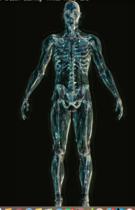 Picture of a translucent male skeleton